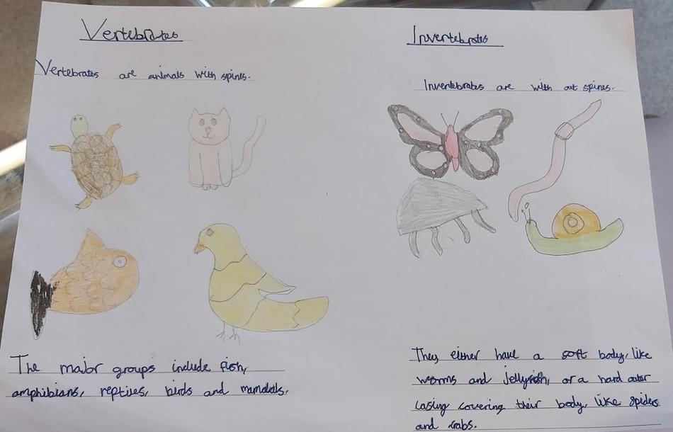 Giving examples of animals who are vertebrates and invertebrates