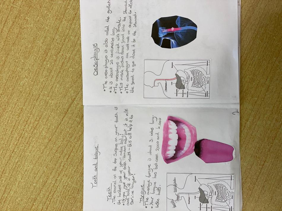 Sam also made a leaflet to show us his learning