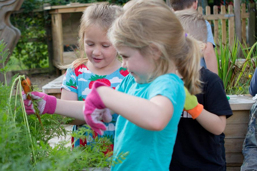 Pulling carrots in the outdoor learning area