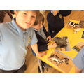 Finding out about African animals