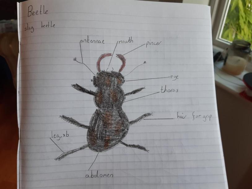 Sam's beetle