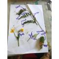 Austin's labelled plants