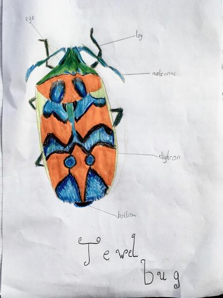 Nina's beetle