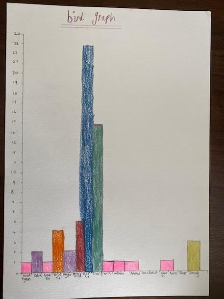 Evie's bird spotting graph