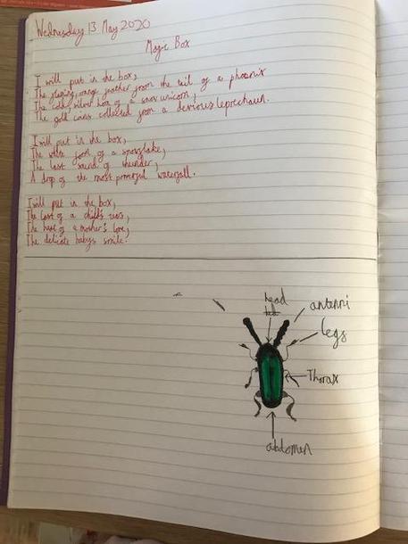 Amelie's poem and beetle diagram