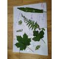 Fin's fantastic leaf poster