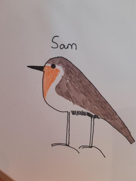 Sam's robin