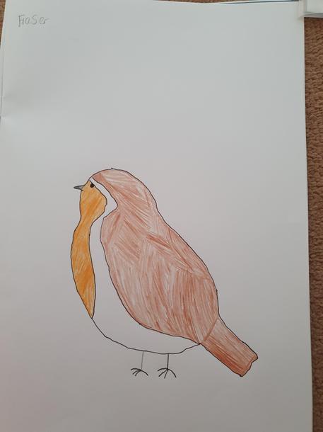 Fraser's robin