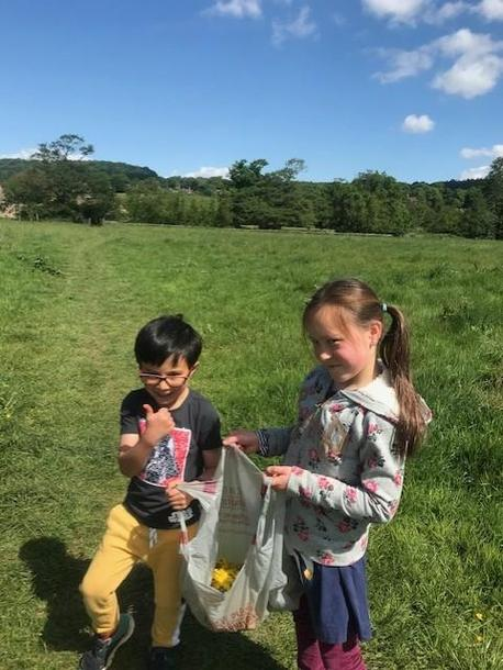 Collecting dandelions to make jam!