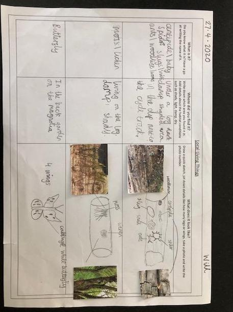 Will's nature survey
