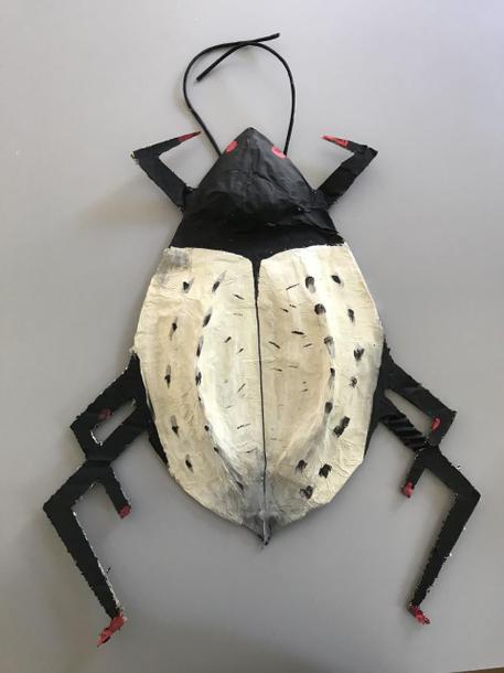 Ellis' Darkling Beetle