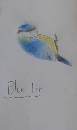 Mollie's marvellous artwork!