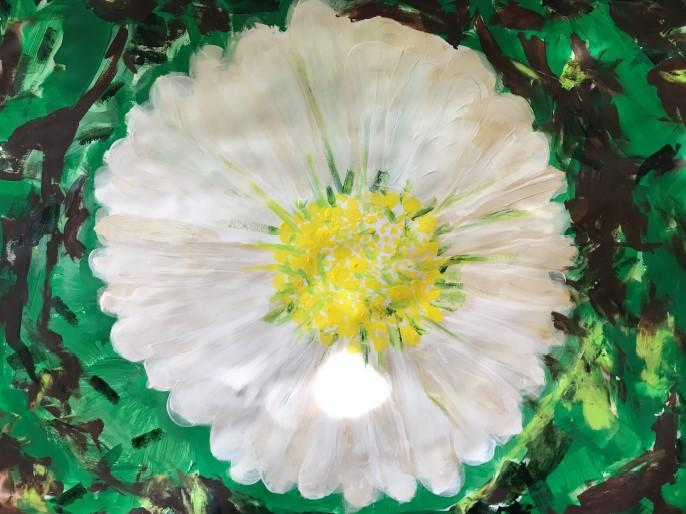 Ellis' daisy