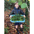 Collecting foilage for our wreaths