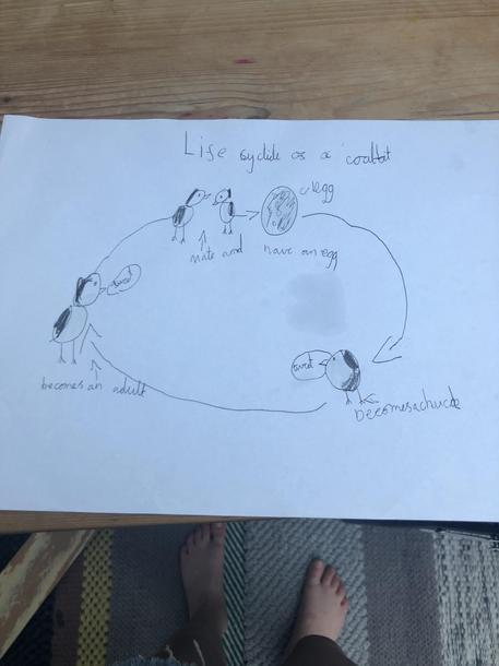 Indigo's bird life cycle