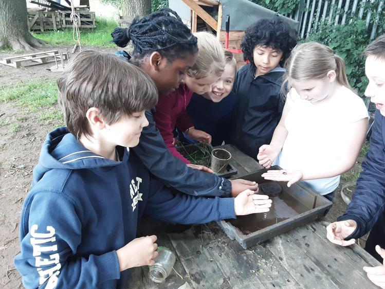 Frog and snail habitat