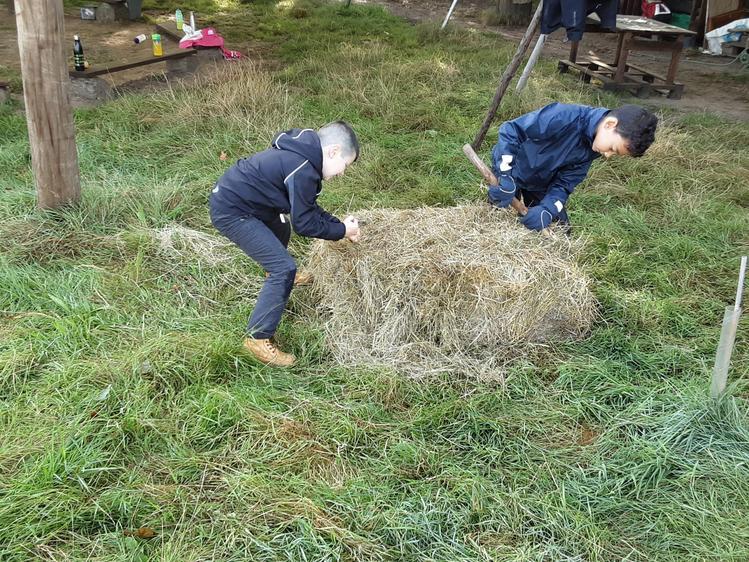 Bashing the hay bale