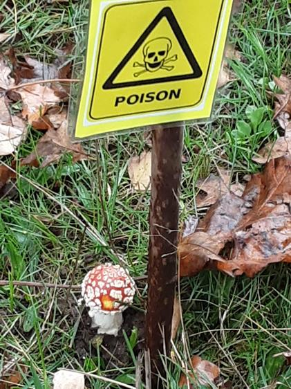 Learning about Poisonous fungus
