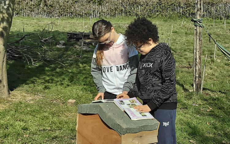 Looking through the wildlife books on site