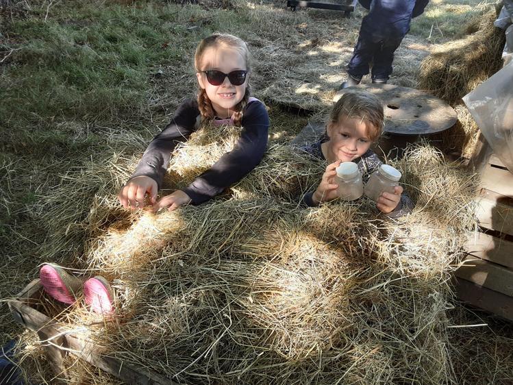 These two enjoying a hay bath