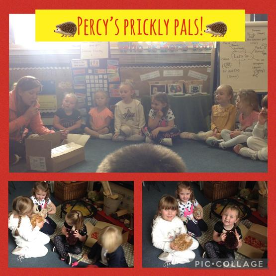 Percy's Prickly Pals