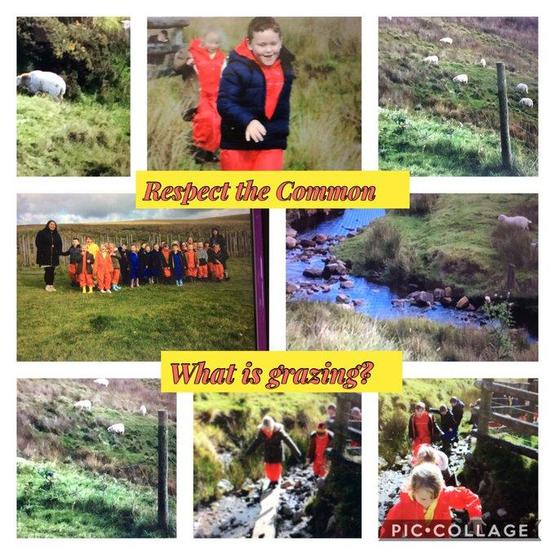 Dosbarth Cardiff exploring the common around our school