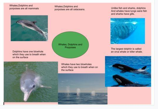 Rowan Class home learning on marine mammals
