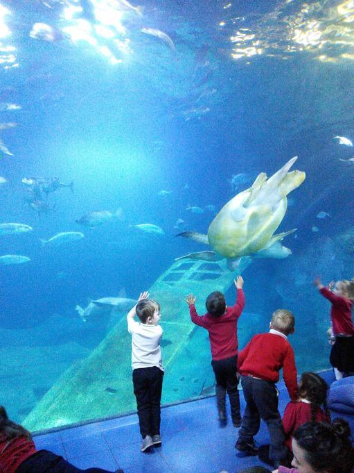 Foundation fun at the aquarium!