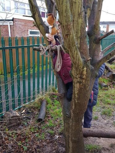 Kipper got stuck up the tree