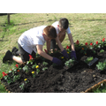 Acorns lending a hand planting.