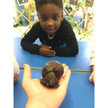 We met our new snail!