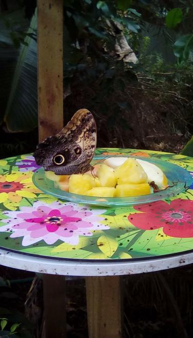 We saw lots of huge butterflies in the hot house.