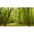 Woodland / forest - thick growth of trees and plants.
