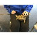 and tortoises.