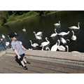 I went to feed the swans.