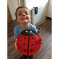 Fabulous ladybird