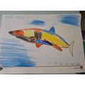 What a colourful shark, Nathan