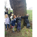 How many children does it take to hug a tree?