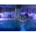 Look at the penguins!
