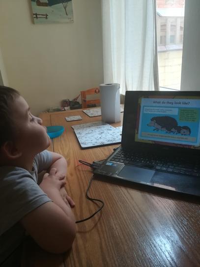 Hedgehog learning