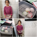 Investigating frozen eggs!