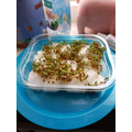 Look how well Elliott's cress is doing!