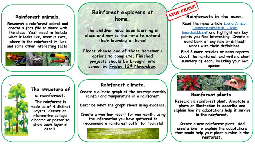 Rainforest explorers homework options