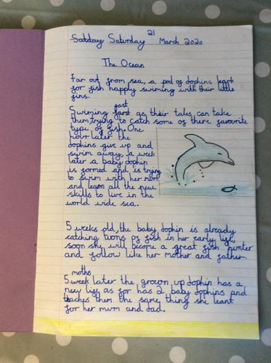 Sophie S's Dolphin Factfile 3