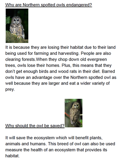 Immi chose to research the northern spotted owl