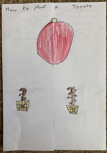 Lincoln's how to grow tomatoes instructions 1