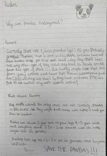 Ben's final piece of writing about pandas