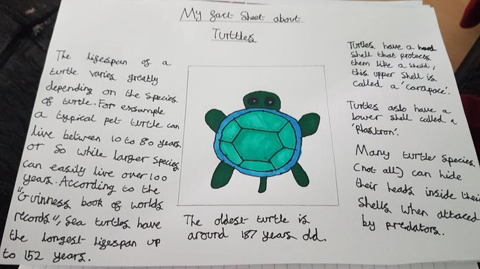 Chloe's fact sheet about turtles!