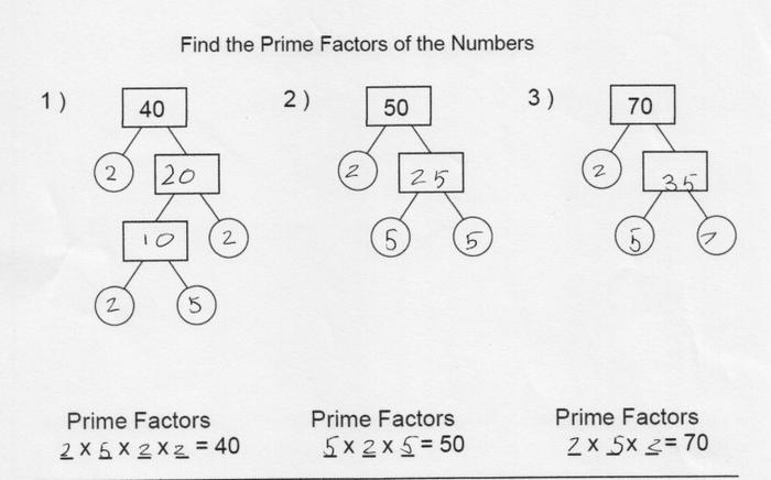 Prime factors by Selena