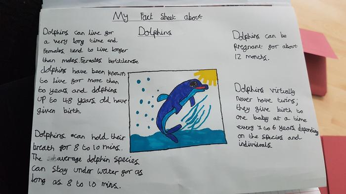 Chloe's fact sheet about dolphins!